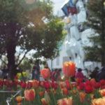 tulip_g